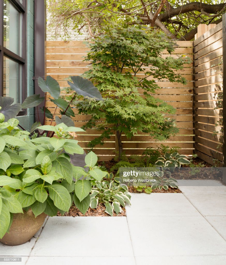 Landscaping and patio of modern condo building : Foto stock