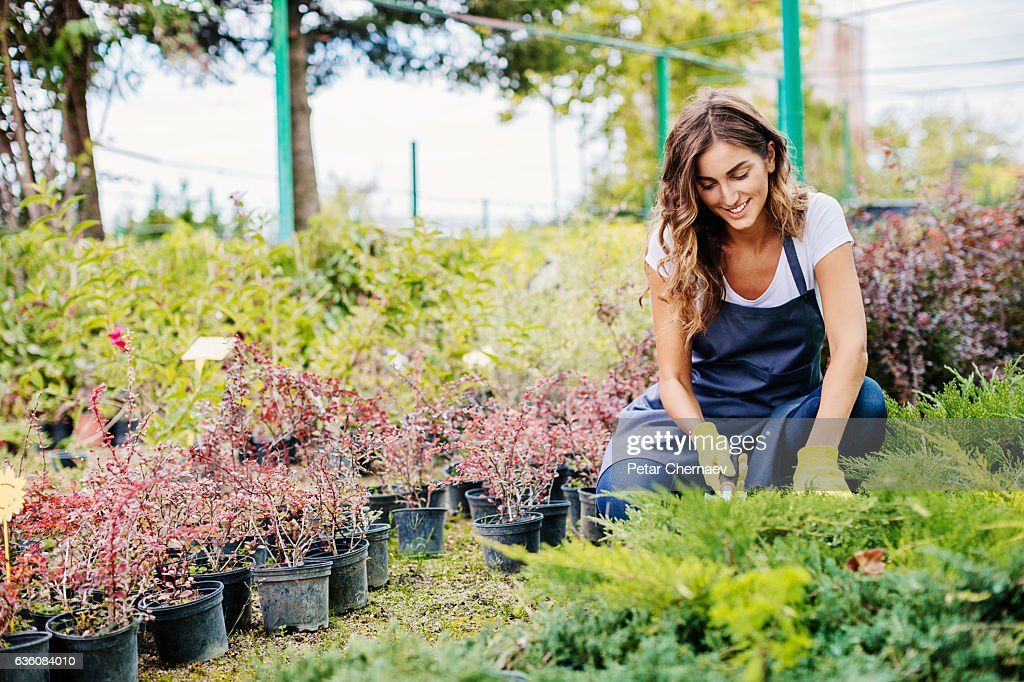 Landscaping : Stock Photo