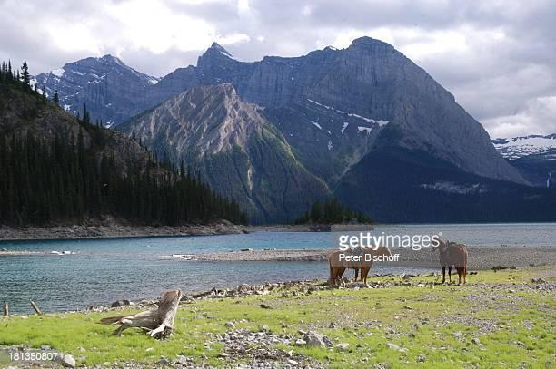 Landschaft, Kanaksis bei Calgary, Alberta, Kanada, Nordamerika, See, Berge, Pferde, Tiere, Reise,
