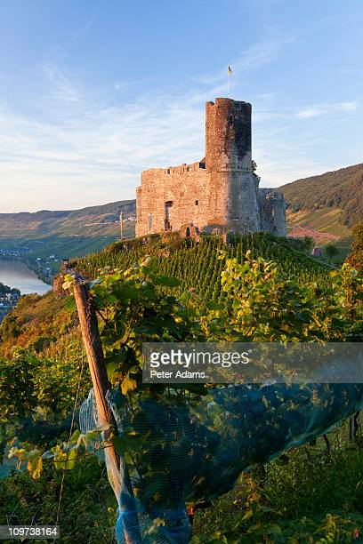 landshut castle above mosel river, germany - peter adams stock pictures, royalty-free photos & images