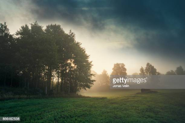 landskap i sverige - fog stock pictures, royalty-free photos & images