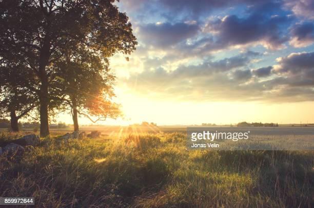 landskap i sverige - june stock pictures, royalty-free photos & images