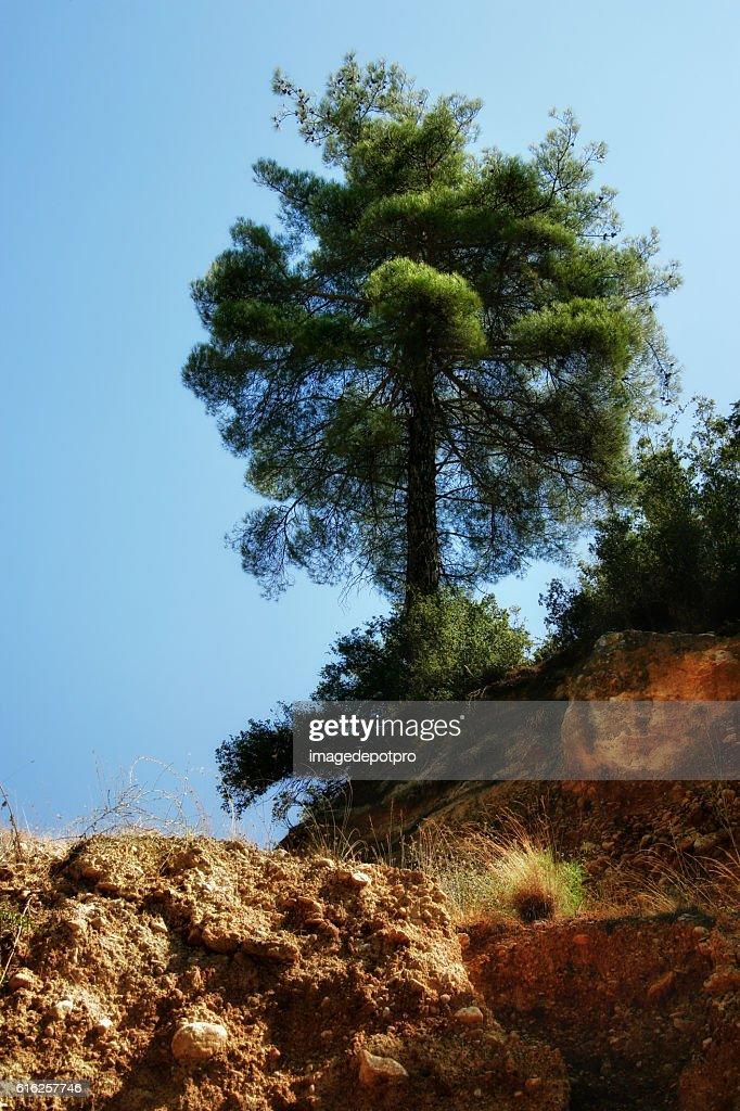 landslide and pine tree : Foto de stock