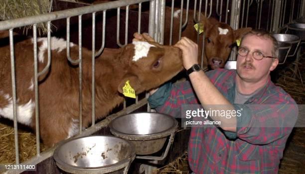 Landwirt Peter Lorenzen zeigt am einige seiner Tiere im Stall in Hörsten . Aus seinem Bestand soll eine rot-bunte Kuh an Rinderwahnsinn erkrankt...
