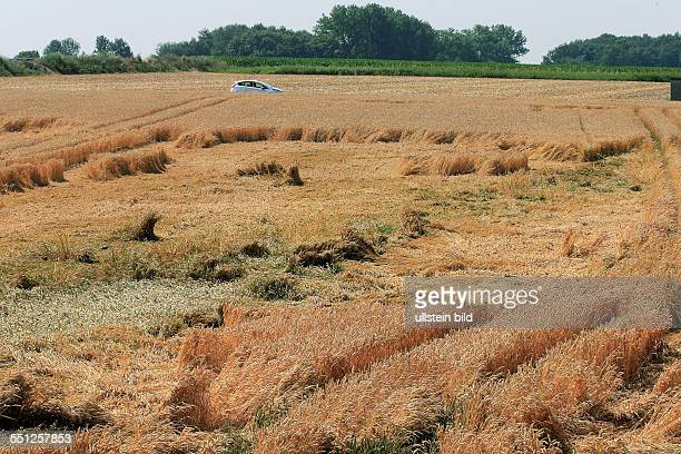 Landwirtschaft Getreideschaden Weizen hat sich gelegt in der Gemarkung Sehnde bei Hannover