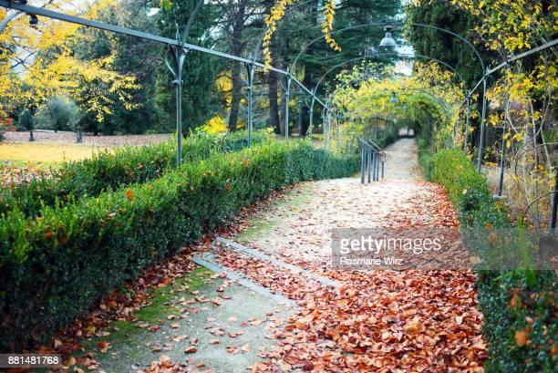Lane in Italian public park, autumn mood