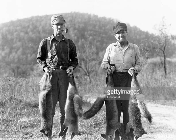MN Langham and Knupp trap in the national forest They are holding red and gray foxes The two men took 52 foxes during October 1939