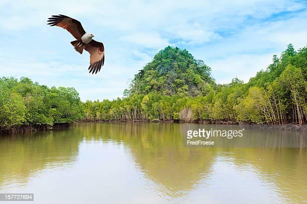 L'île de Langkawi, Malaisie