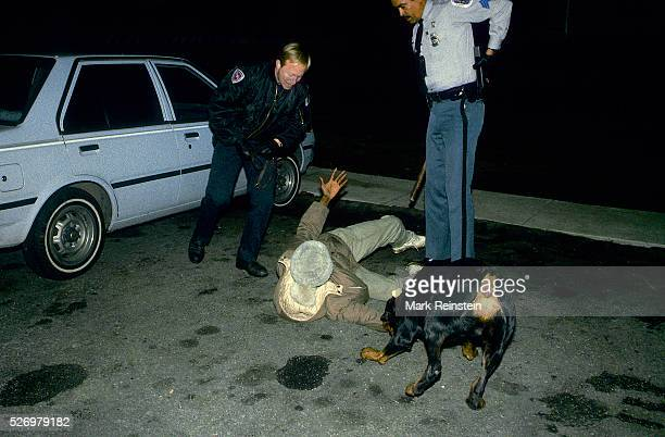 Langley Park Maryland 1988 Prince Georges County Maryland police officers use a canine to help them apprehend a suspected crack cocaine dealer who...