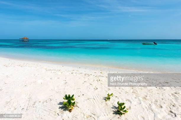 Lankanfinolhu island, Maldives