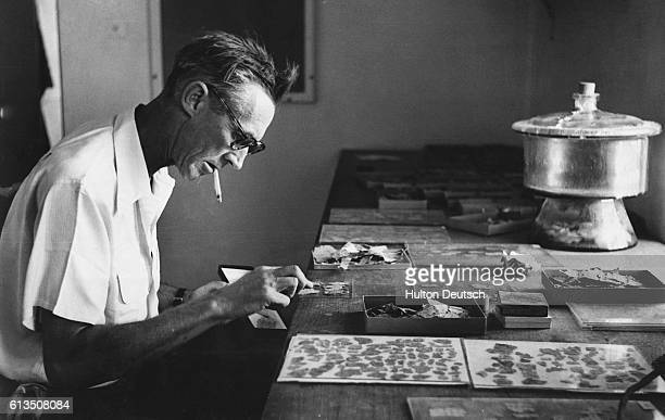 G Lankester Harding British Director of Antiquities of the Hashemite Kingdom of Jordan pieces together fragments of the Dead Sea Scrolls at the...