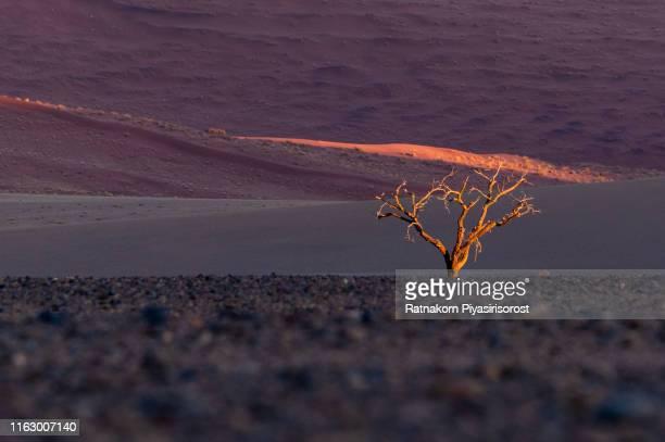 lanscape of desert and sand dune in namibia - köcherbaum stock-fotos und bilder