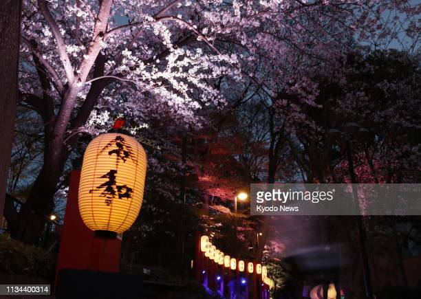 A lantern bearing Japan's new era name Reiwa is hung under a cherry tree in full bloom in Tokyo on April 1 following the announcement of the name by...