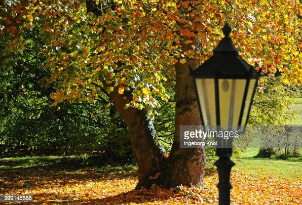 Lantern in front of an autumn coloured deciduous tree, Uetersen, Schleswig-Holstein, Germany, PublicGround