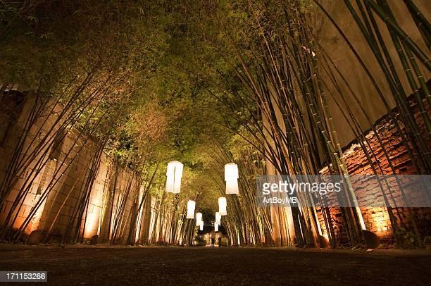 Laterne beleuchteten Bambus-Pfad