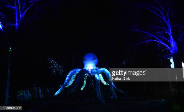 Lantern of an Octopus looks on during the rehearsals of Chester Zoo light trail festival called 'The Lanterns' at Chester Zoo on December 01, 2020 in...