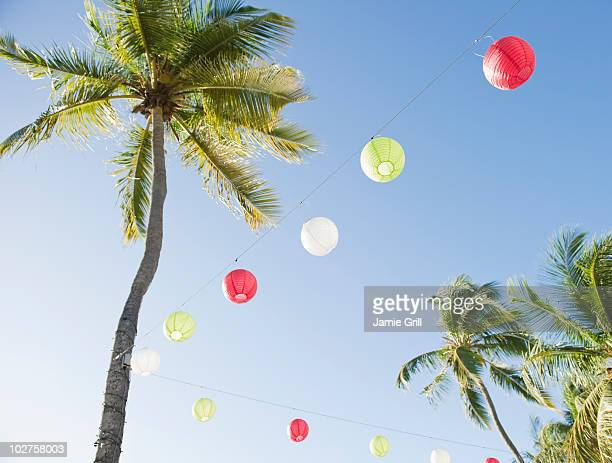 Lanterns and palm trees