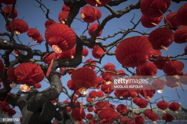 TOPSHOT Lanterns are hung from a tree outside Ditan Park in Beijing on February 1 2018 The Lunar New Year falls on February 16 this year with...