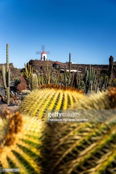lanzarote, cactus and windmill against blue sky. canary islands - francesco riccardo iacomino spain foto e immagini stock