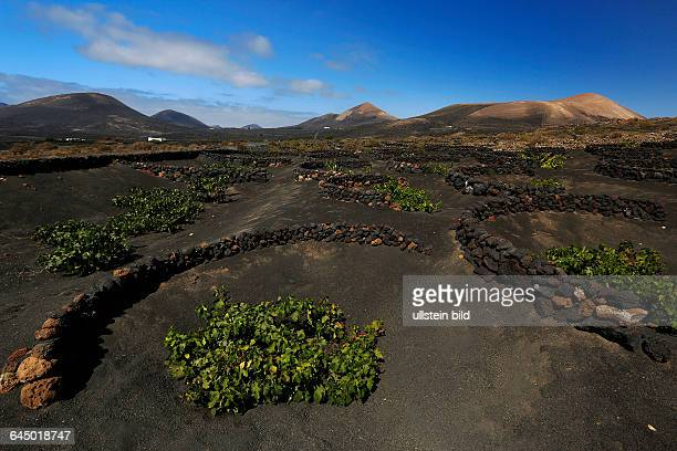 Lanzarote, Spanien, Kanarische Inseln, Canary Islands, Spain, Weinbaugebiet, La Geria