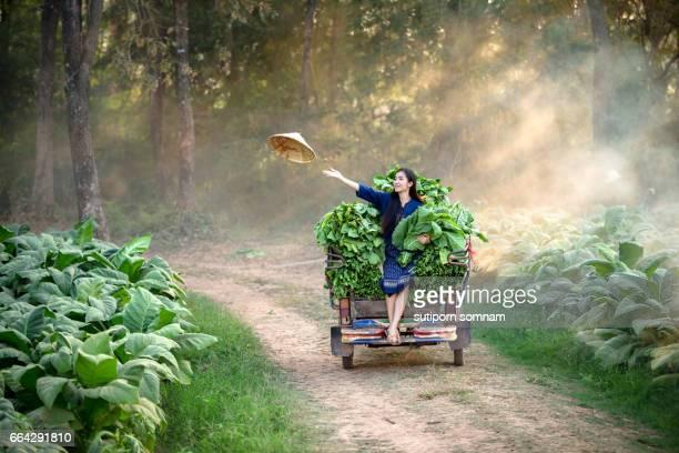 Lao woman is farming in the tobacco leaf field