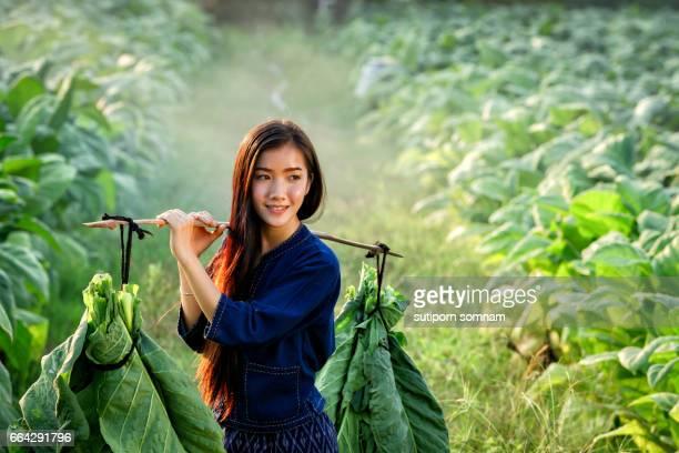 Lao women carry tobacco leaf