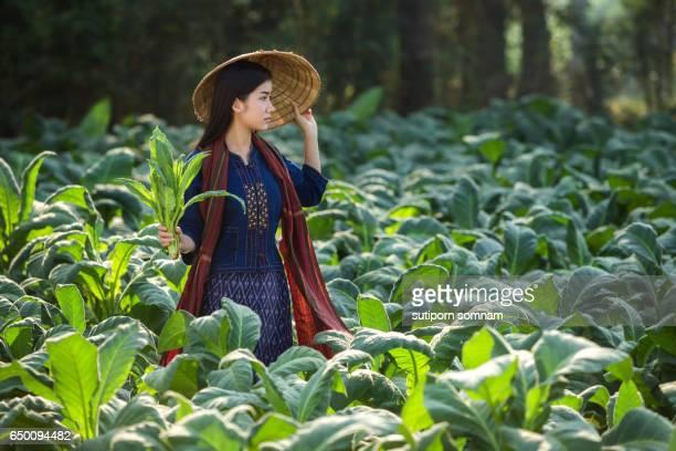 Laos women beautiful portrait farming concept tobacco field