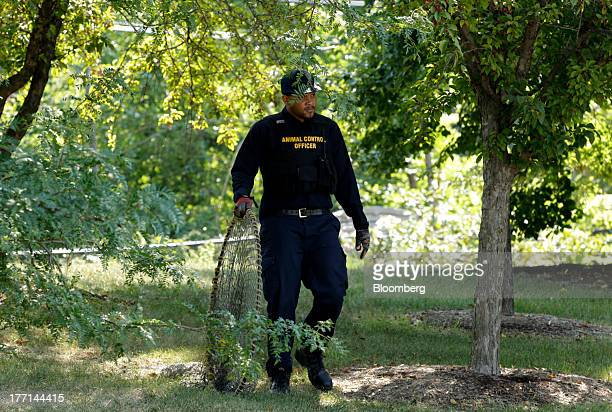 Lapez Moore an officer with the City of Detroit Animal Control looks for a stray dog in Detroit Michigan US on Monday Aug 19 2013 Thousands of stray...