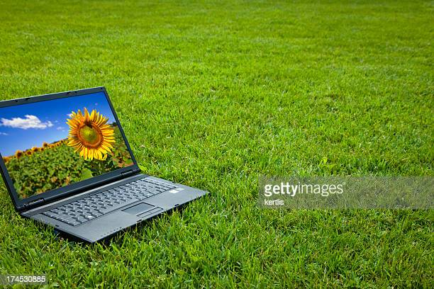laptop and grass - screen saver stock photos and pictures