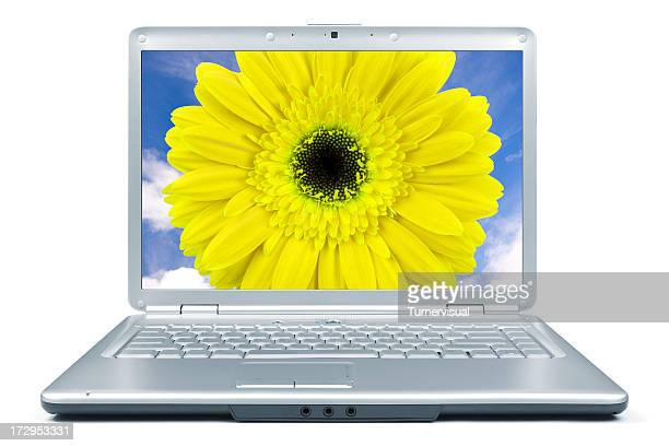 laptop flower + clipping path - screen saver stock photos and pictures