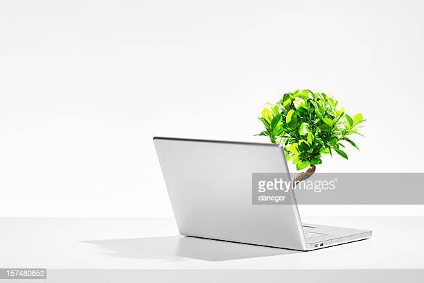 A laptop with a small tree growing out of the keyboard