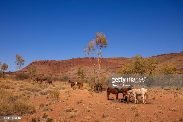 larapinta and namatjira drive, macdonnell ranges national park, alice springs, northern territory, australia - nature reserve stock pictures, royalty-free photos & images