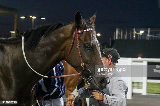Lara's Web after winning the XXXX Gold FM BM64 Handicap at Racingcom Park Racecourse on February 01 2018 in Pakenham Australia