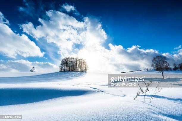 雪の丘のカラマツの森と美瑛の青空 - 深い雪 ストックフォトと画像