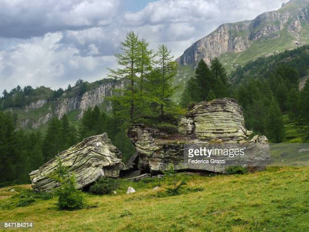 larch trees growing on granite boulder at pian stalaregno, alpe veglia natural park - larch tree stock pictures, royalty-free photos & images