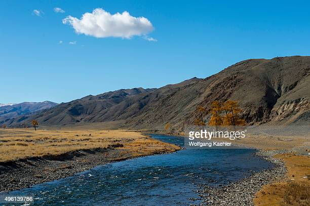 Larch trees in the fall along the Sagsai River in the Sagsai Valley in the Altai Mountains near the city of Ulgii in the BayanUlgii Province in...