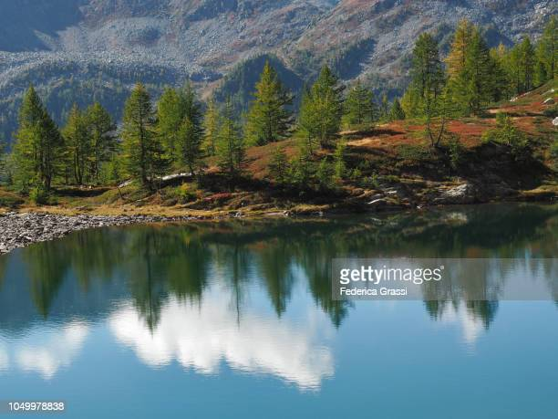 Larch Trees Reflections on Alpine Lake Lago di Agro in The High Bognanco Valley