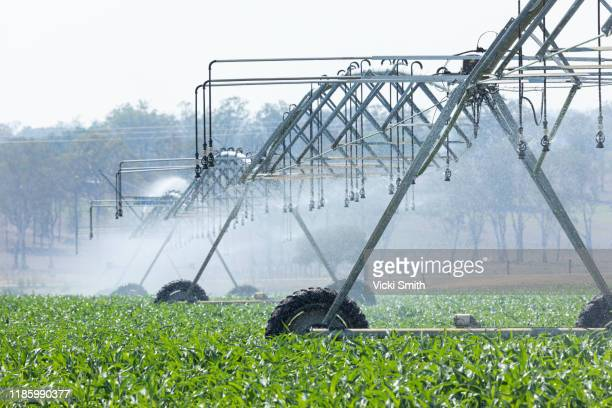 large agricultural irrigation machine spraying the corn crops with water - agriculture stock pictures, royalty-free photos & images