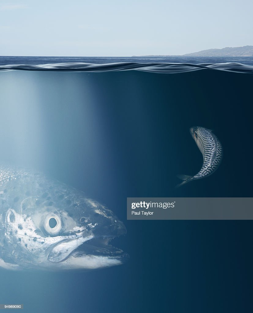 Large and Small Fish Underwater : Stock Photo