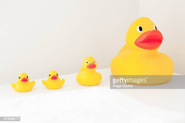 large and small rubber ducks in a row - ente wasservogel stock-fotos und bilder