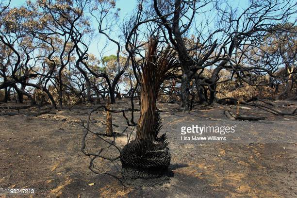 Large areas of burnt forestry and flora is seen in the Parndana region on January 08 2020 on Kangaroo Island Australia Almost 100 army reservists...