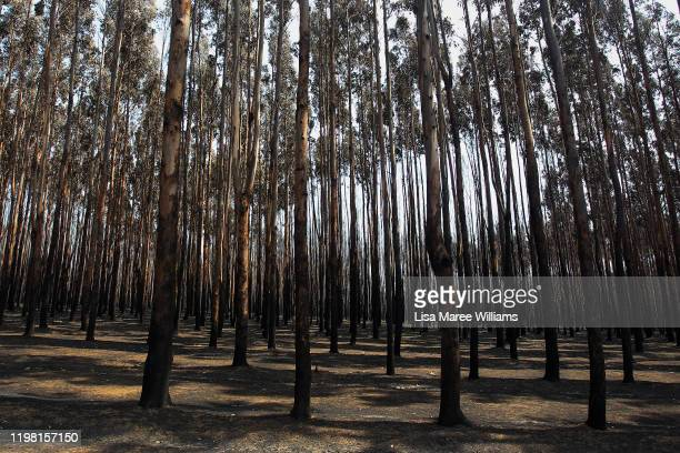Large areas of burnt forestry is seen in the Parndana region on January 08 2020 on Kangaroo Island Australia Almost 100 army reservists have arrived...