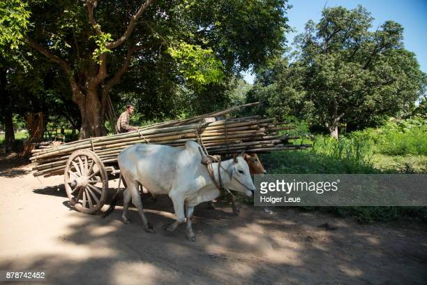 large bamboo poles are transported by ox cart, ava (innwa), mandalay, myanmar - ava hardy stock pictures, royalty-free photos & images