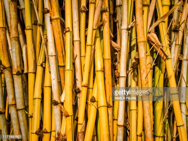 large bamboo sticks lined up and piled together - 竹 ストックフォトと画像