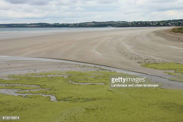 a large beach in west brittany - green algae ストックフォトと画像