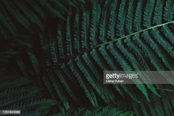 large beautiful dark green fern leaves lit in nature - illusion stock pictures, royalty-free photos & images