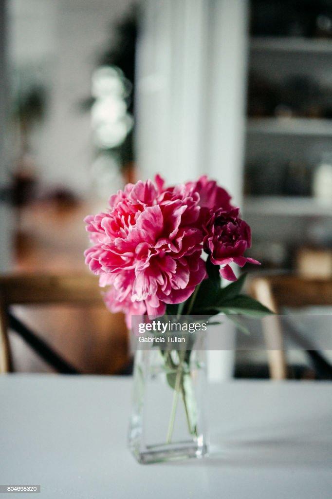 Large beautiful peonies in crystal vase. White modern interior : ストックフォト