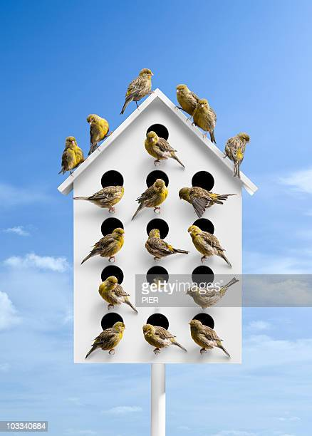 Large bird box with many holes covered in birds