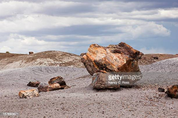 large boulders of petrified wood, national park - petrified wood stock pictures, royalty-free photos & images