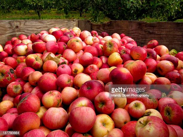 Large box of apples